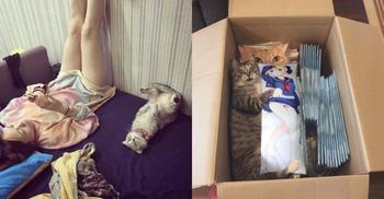 20 забавных фотографий котов, которые заставят вас смеяться