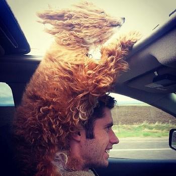 30 убедительных причин завести собаку