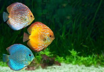 К чему снится живая рыба мужчине: значение и толкование сна