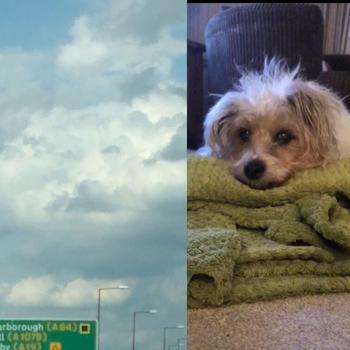 Девушка увидела свою собаку в небе через пару часов после ее смерти