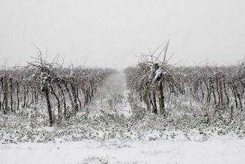 Что такое снегозадержание и как оно помогает растениям