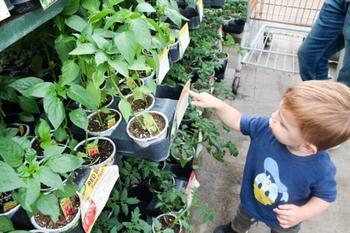 6 признаков некачественной рассады, или какую рассаду лучше не покупать