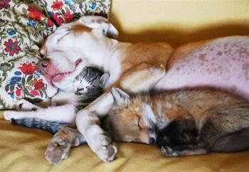 Фотографии необычной дружбы животного мира