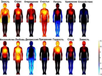 Где на самом деле живут наши эмоции