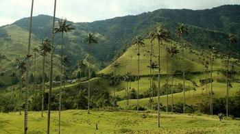 Долина восконосных пальм