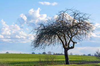 Почему гниют деревья в саду - 5 основных причин