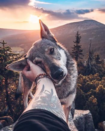 Парень вывел хэштег #FollowMeTo на новый уровень, используя для этого свою собаку