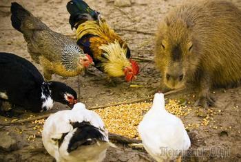 Животное, с которым все хотят дружить