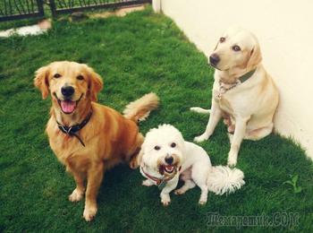 20 собак, которые взорвали интернет