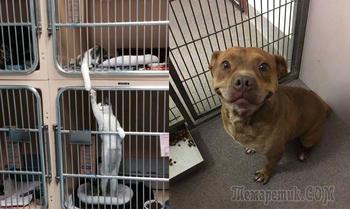 Душевные и веселые фотографии разных ситуаций из приютов для животных