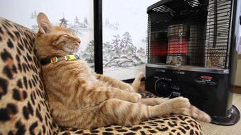 Как с помощью кошки найти самое тёплое место в доме