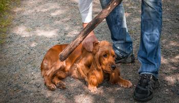Жестокое обращение с животными: куда обращаться, кому звонить, законодательство и уголовная ответственность