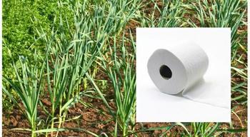 Как упростить посадку растений с помощью... туалетной бумаги