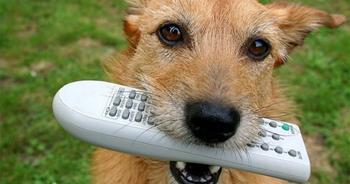 В Израиле придумали дистанционный пульт управления собакой