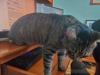 20 котиков-скотиков, для которых понятие личного пространства не более чем чушь