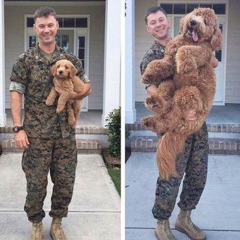 Собаки, которые слишком быстро выросли