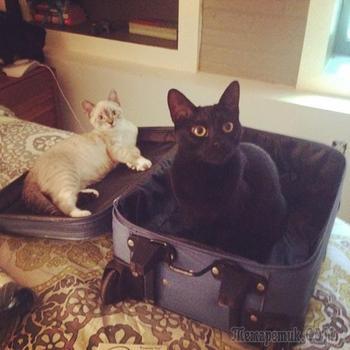 Коты, которые всегда рады помочь своему хозяину