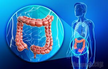 5 очень веских причин с большим уважением относиться к своему кишечнику