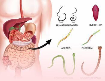 Тыквенные семечки от паразитов: Как принимать