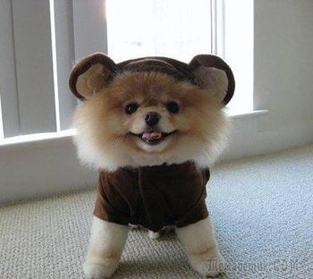 Собаки, которые непременно заставят вас улыбнуться
