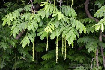 9 растений для влажных и сырых почв