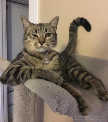 30 восхитительных котов, харизме которых вы не сможете сопротивляться. И правильно