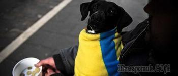 Государство отказалось обеспечивать выживание населения Украины