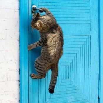 20 котов, которые отчаянно хотят попасть в дом