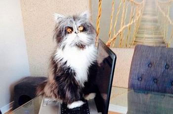 Интересные факты о котиках, которые вы могли не знать