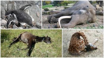 10 удивительных фактов о том, как спят животные