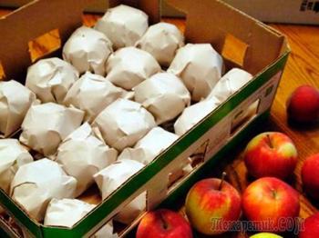 Как правильно хранить овощи и фрукты в погребе