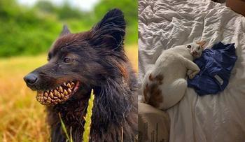 Фото, на которых животные своими шуточками чуть не довели до инфаркта хозяев