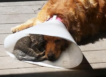 Я — кот, мне так удобно: коты в самых неожиданных местах