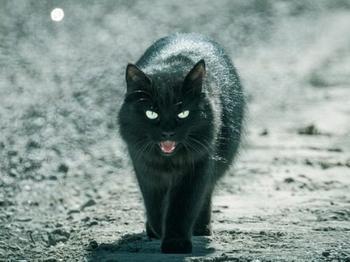 Как сделать чёрную кошку символом удачи?