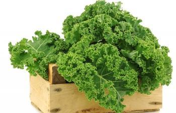 Капуста листовая Кале: польза и особенности выращивания необычного овоща