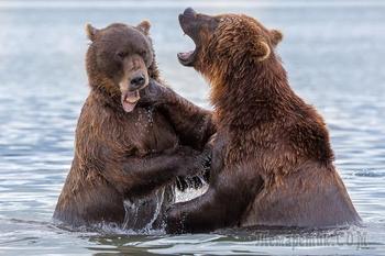 Первозданная Камчатка или Земля медведей