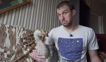 Житие с гусем или будни минского блогера