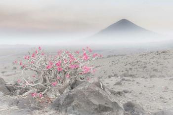 Фотографии победителей конкурса на лучшего европейского фотографа дикой природы 2020