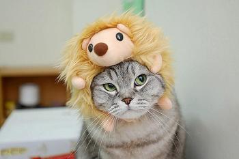 Чем ежики лучше кошек