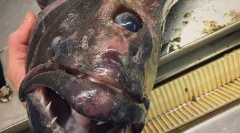 7 пугающих снимков жутких существ, неизвестных науке