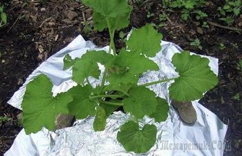 8 полезных советов и хитростей по выращиванию комнатных растений