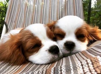 27 очаровательных щенят, которые подарят позитив и вызовут улыбку