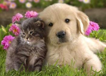 9 способов поддержания порядка в доме, если у вас есть собака или кошка