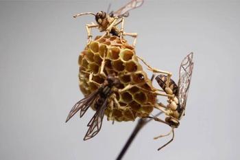 Удивительные скульптуры насекомых из бамбука от Нориюки Саито