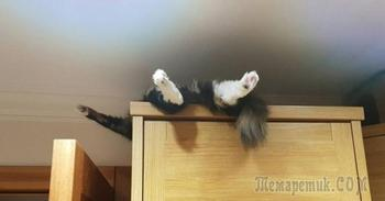 100 самых ценных снимков котов. Всех времен и народов (Часть 1)