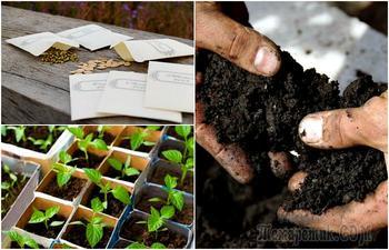 16 ошибок, которые иногда совершают даже опытные садоводы при выращивании рассады