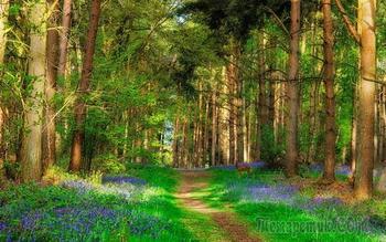 Литовский лес весной