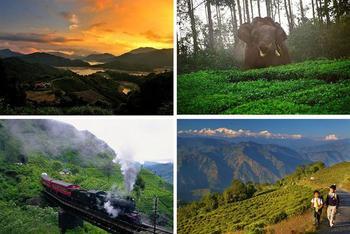 Чайные пейзажи