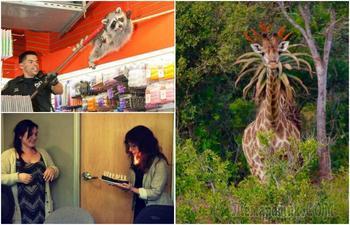 17 случайных фотографий, которые заставят усомниться в своих глазах