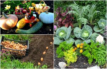 10 правил овощного «добрососедства», которые гарантировано приведут к хорошему урожаю